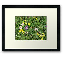 Tiny Jewels - Colourful Wildflowers Framed Print