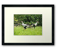 Secretary Birds Framed Print