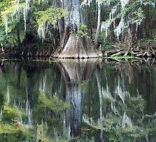 Ginny Springs Florida by Charles W Hooper