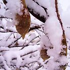 Wisteria Vines and Seed Pods in Snow by Victoria John Ritterbush