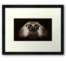Waiting at the door... Framed Print