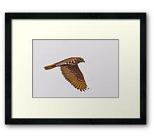 Ferruginous Hawk (Dark Morph) Framed Print