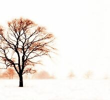 The Warmth of Winter by Kristina Gale