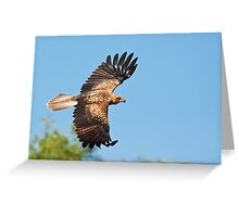 Whistling Kite in Flight Greeting Card