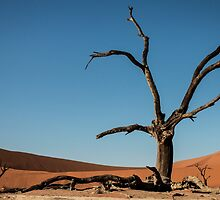 Deadvlei 2 by Marylou Badeaux
