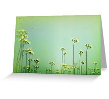Flowers along the beach path Greeting Card