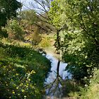 Park School Creek by kthomas