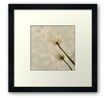 White Tulips in April Framed Print