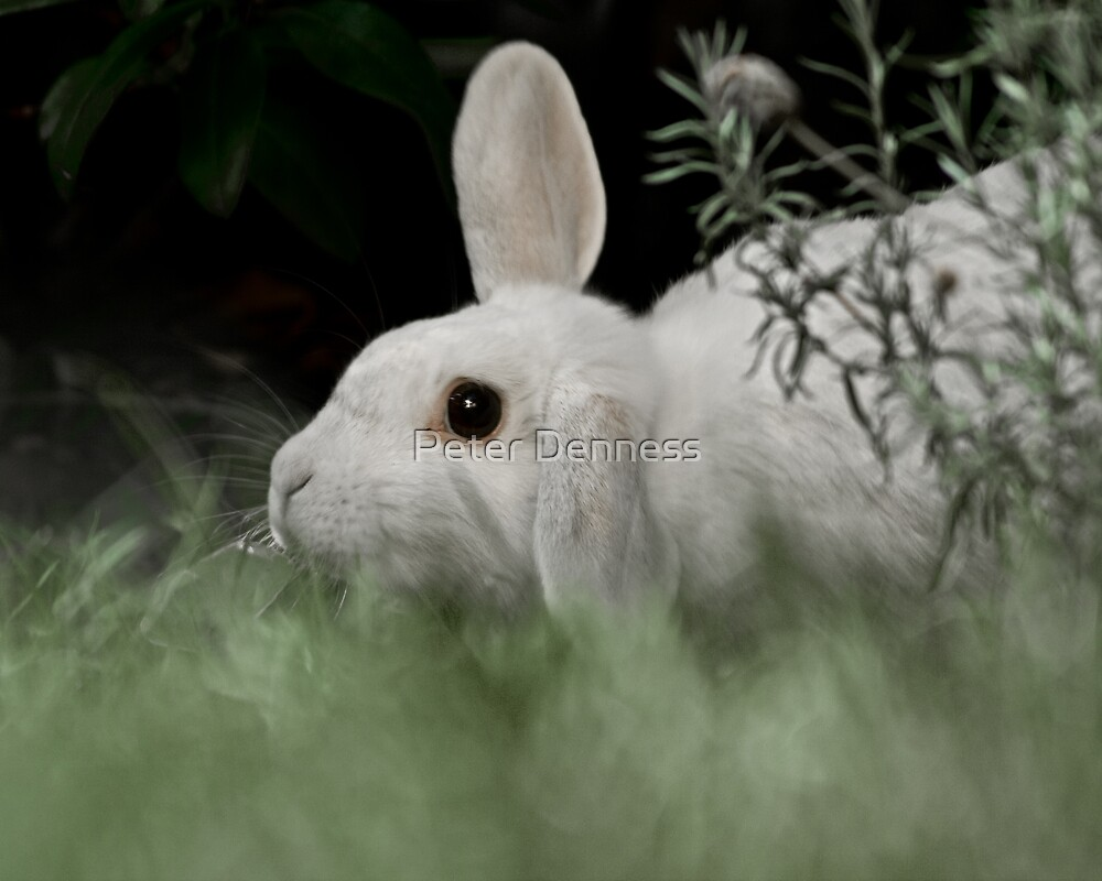 White Rabbit at Dusk by Peter Denness