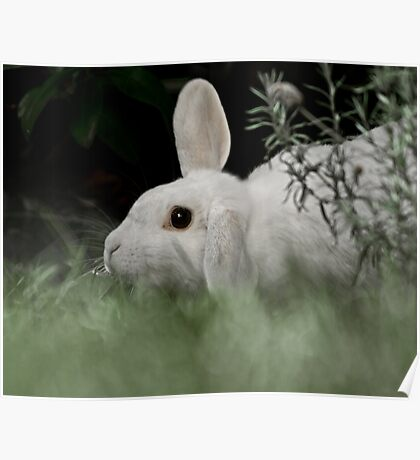White Rabbit at Dusk Poster
