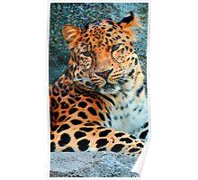Amur Leopard ~ A Solemn Portrait Poster