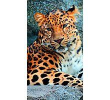 Amur Leopard ~ A Solemn Portrait Photographic Print