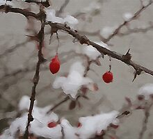Winter Berries by Linda Sannuti