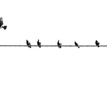 7 birds on a wire... by Kristina Gale