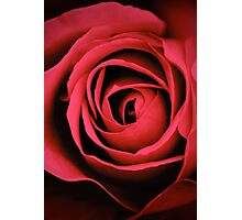 Roses are red , violets are blue..I captured this rose just for you.. Photographic Print