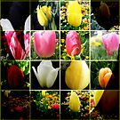 Tulip Fever by Melissa Park