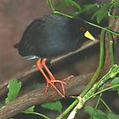 Black Crake I by Lisa G. Putman