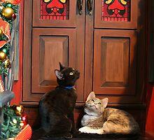 Christmas Wonder by Barbara  Brown