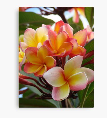 Fragrant Frangapani Bloom Canvas Print