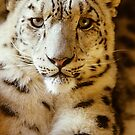 Snow Leopard by secondcherry