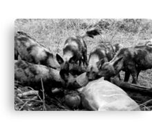 Wild Dog Kill Canvas Print