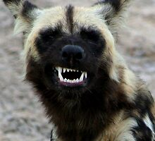 Wild Dog Grin by Kevin Jeffery