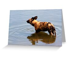 Wild Dog in water Greeting Card