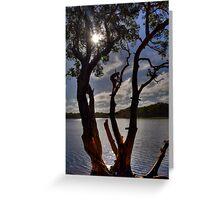Rope Swing - Lake Ainsworth, Lennox Head, Australia. Greeting Card