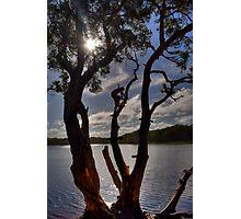 Rope Swing - Lake Ainsworth, Lennox Head, Australia. Photographic Print