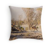 Kangaroos in the wild Throw Pillow