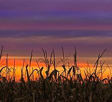 Sky Maize by Kenneth Keifer