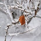 Winter Leaf by Kathleen Brant