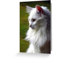 White Cat Profile Greeting Card