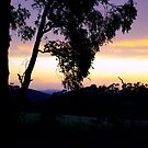 Sunset, Kinglake by Elaine Stevenson