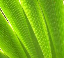 Blades of Iris by shimschoot