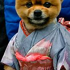 Japanese Dog in Kimono by Andrew Gray