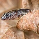 Worm skink by ThisMoment