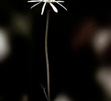 flower tall by amante