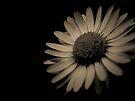 Daisy by Mojca Savicki