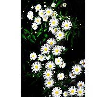 Daisyfall Photographic Print