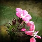 Wildflowers - Soft Pink Impressions by Marilyn Harris