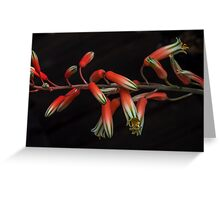 Aloe Flowers. Greeting Card