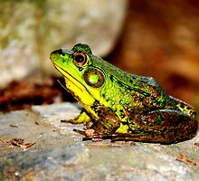 BULLFROG: King for a day...... by LjMaxx