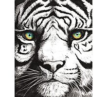 Beautiful - Tiger With Blue Green Eyes Photographic Print