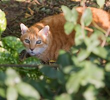 cat in the leaf by spetenfia