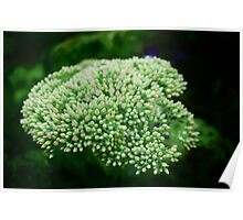 Green vegetative background  Poster