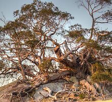 The Tree of Rock by Ric Raftis