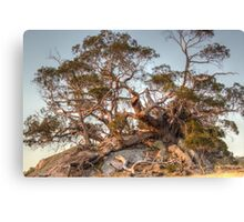 The Tree of Rock Canvas Print