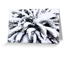 Fronds of Snow Greeting Card