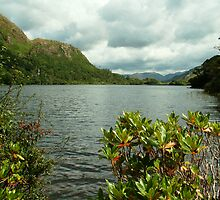 Killary Fiord at Kylemore Abbey by Alice McMahon